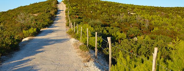 The beautiful Puglian countryside