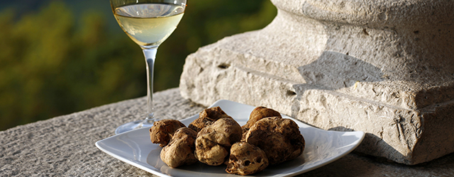 White truffle hunting in Istria