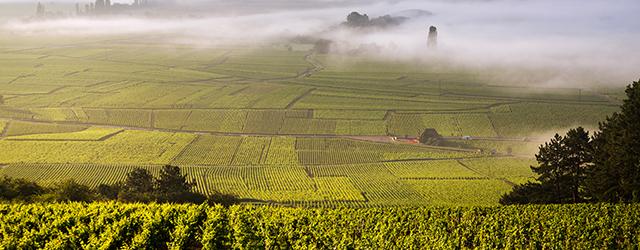 The vineyards of Cote de Beaune in Burgundy